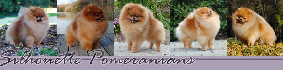 Silhouette Pomeranians: Other Breeders